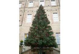 www.alberi-natale.it